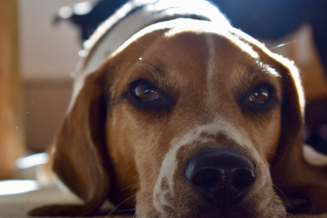 Beagle Reviews - Cefn Mably Arms, Michaelston y Fedw