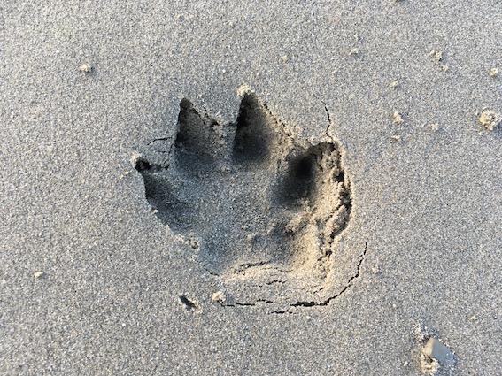 Beagle Dog Holiday Blog - Day Five, Gwbert, St Davids, Cardiff